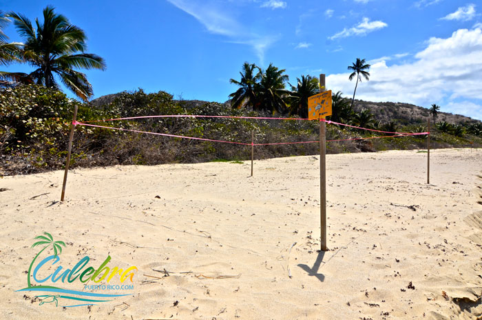 Puerto-Rico-Turtle-Nesting-Beaches-Culebra-3