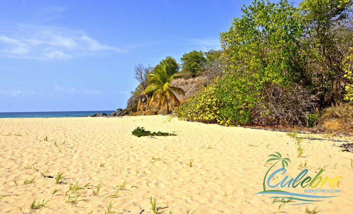 brava-beach-culebra-puerto-rico-sandy
