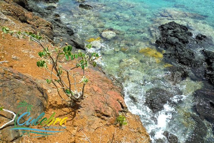 carlos-rosario-snorkeling-culebra-puerto-rico-8df