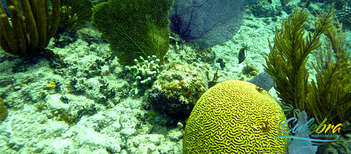 The Coral Reefs - Attractions in Isla de Culebra, Puerto Rico