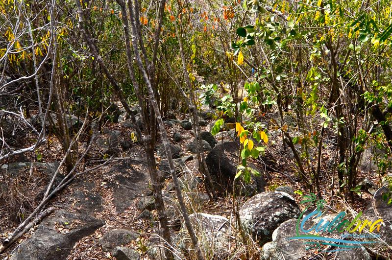 hiking-trails-culebra-puerto-rico-resaca-4