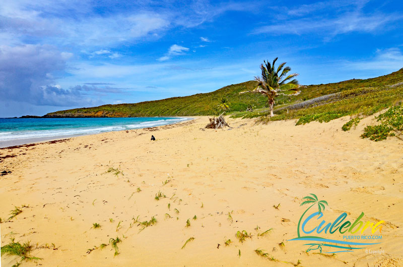 Playa Resaca - Culebra Puerto Rico Beaches
