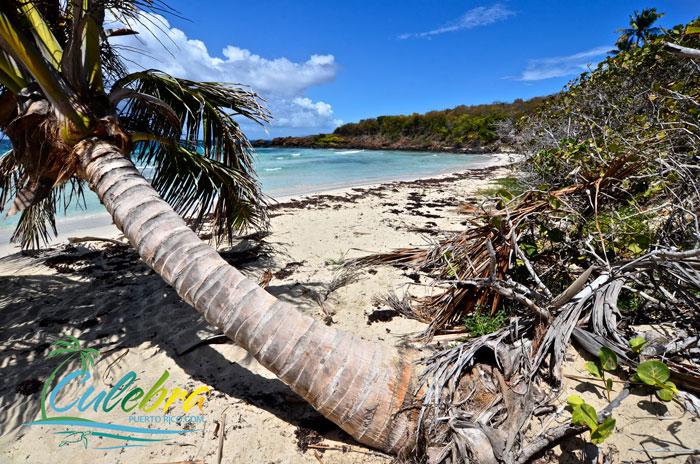 caribbean-best-beaches-culebra-island-zoni-3