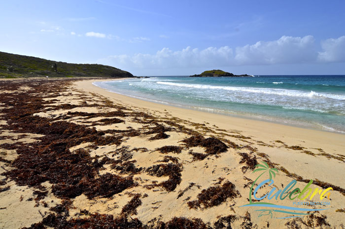 playa-brava-beach-culebra-puerto-rico-34