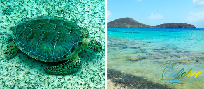 Swim with turtles at Tamarindo Beach - Culebra Island, Puerto Rico
