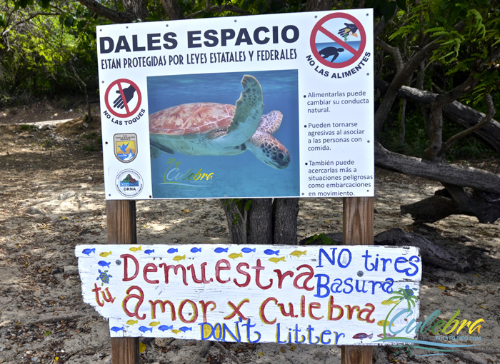 swimming-turtles-culebra-puerto-rico-warning