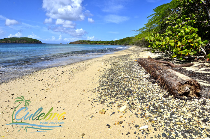 tamarindo-beach-puerto-rico-culebra-turtle-swim