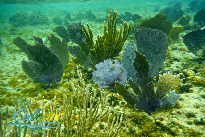 Coral reef in Culebra, Puerto Rico - Melones beach