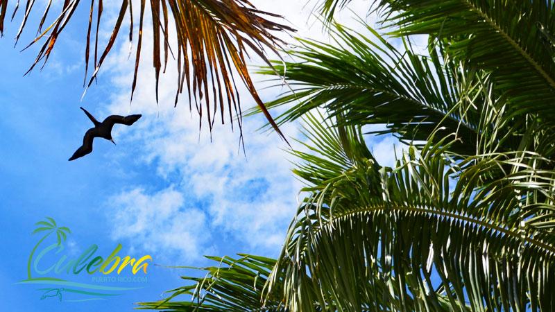 Birdwatching / Birding - Things to do in Culebra Island, Puerto Rico